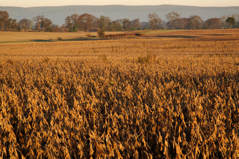 FinanceBrokerage - Commodity US Replaces Brazil as Top Supplier of Soy in EU
